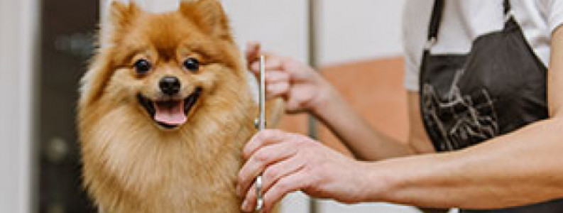 Online Advanced Professional Dog Grooming Course Learndirect