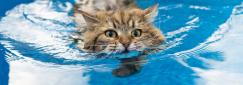 How to study Animal Hydrotherapy online