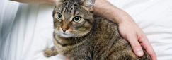 What Animal Care Course is right for me?