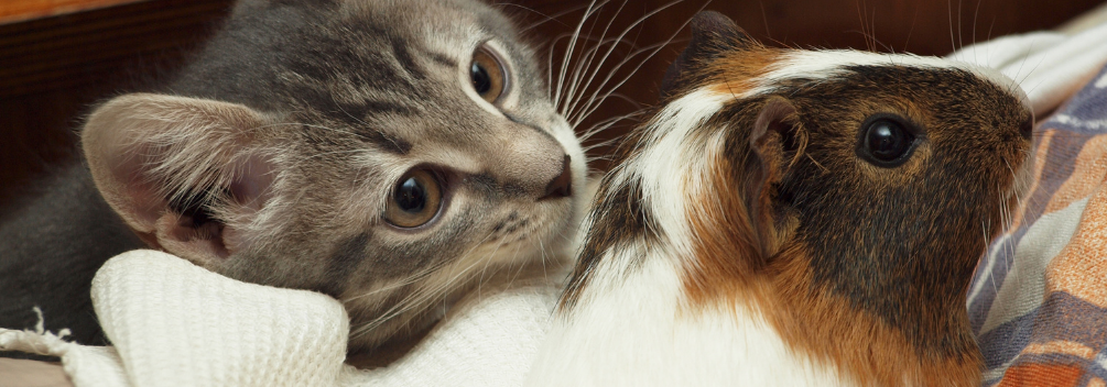 learndirect - learn to groom dogs, cats and small pets online