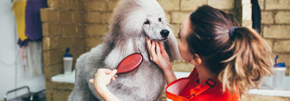 Dog Grooming Qualifications and Training Courses