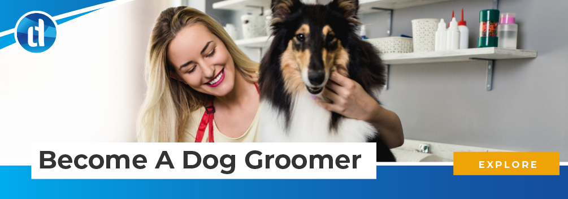 learndirect - become a dog groomer
