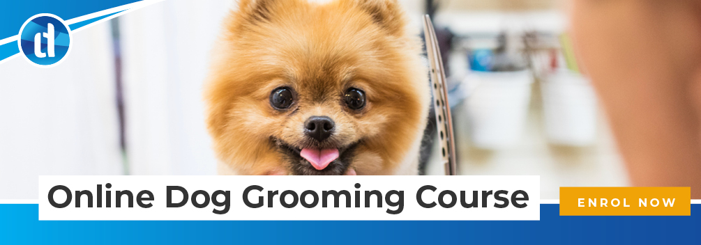LD | What Is It Like to Be A Dog Groomer? | CTA