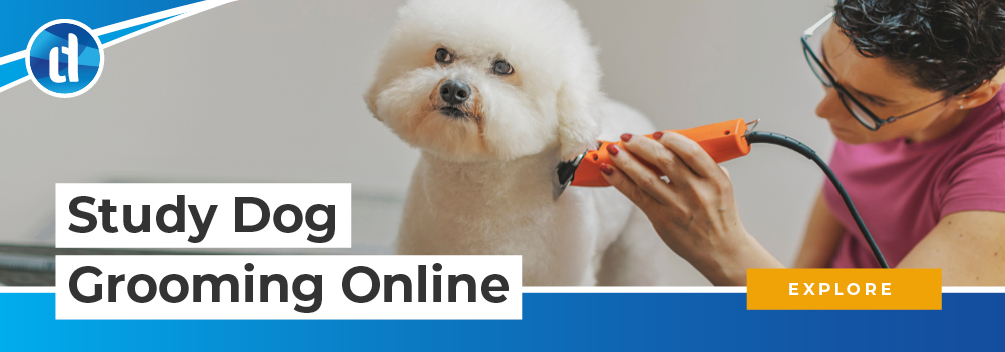 learndirect - Study dog and pet grooming online