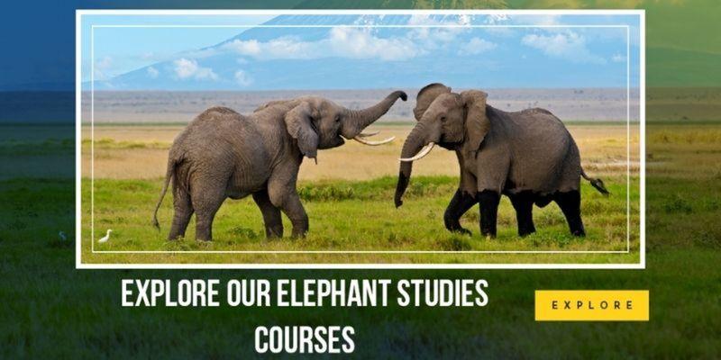 online elephant studies