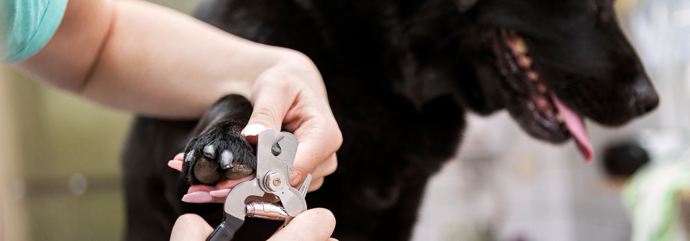 learndirect - Dog Groomer - A Patient and Calm Nature is Essential
