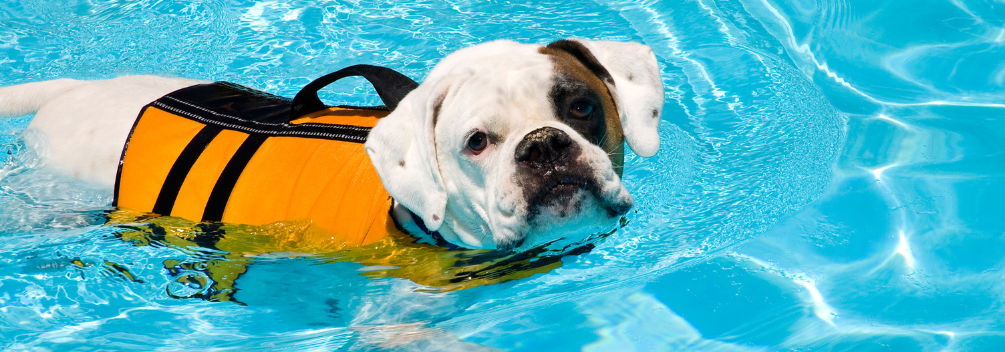 How to become an Animal Hydrotherapist
