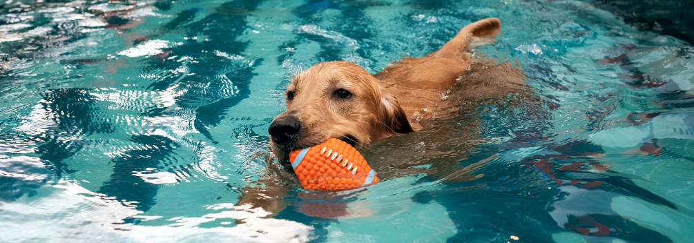 learndirect - How to study Animal Hydrotherapy online