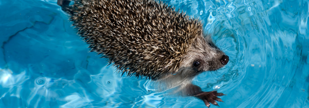 learndirect - How to study Animal Hydrotherapy in an online course
