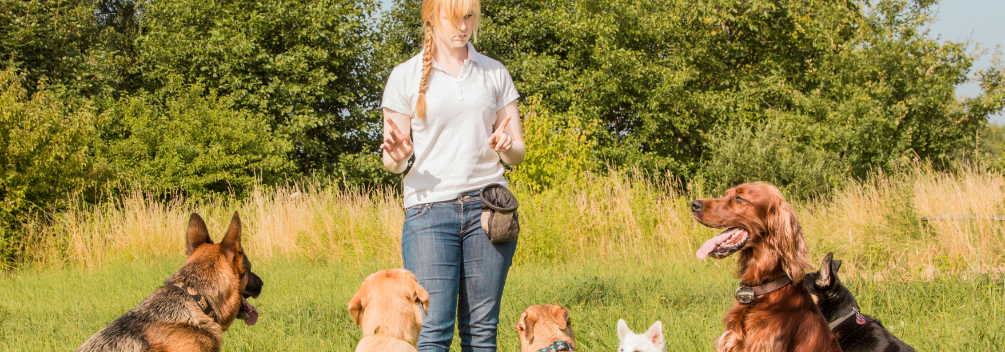 learndirect - Become a Dog Obedience Trainer