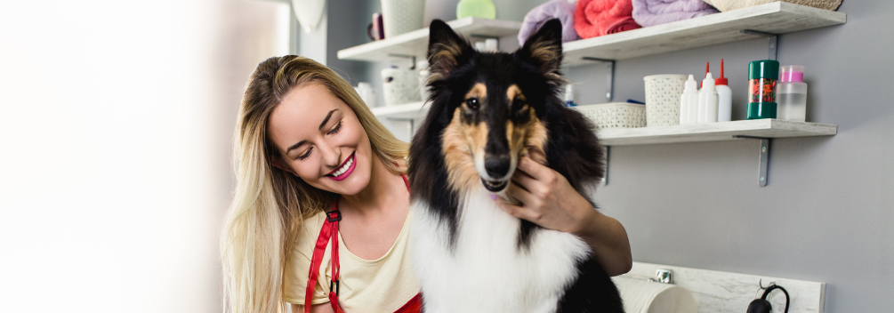 LD | What Is It Like to Be A Dog Groomer? | What Does A Dog Groomer Do?