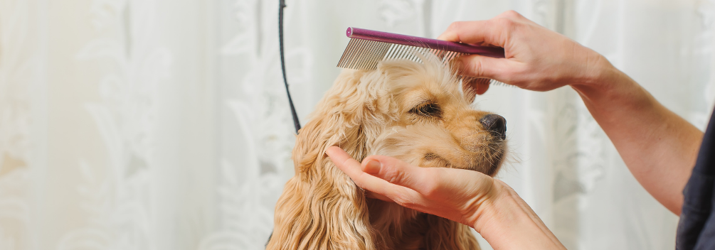 LD | What Is It Like to Be A Dog Groomer? | Excellent Customer Service Skills