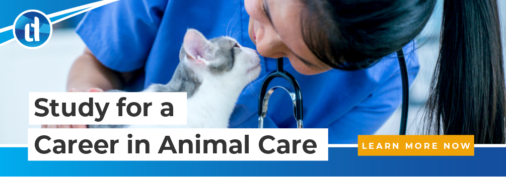 LD | Interesting Roles Working with Animals | CTA