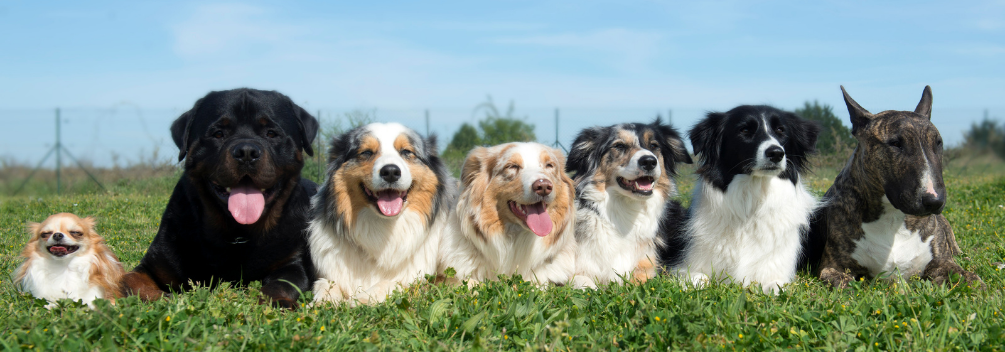 LD | Kennel and Cattery Management| What do you do in a kennel or cattery?