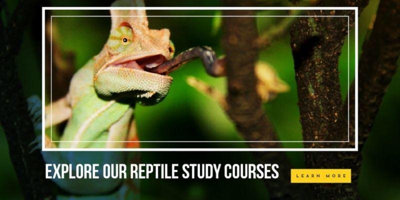 study reptiles