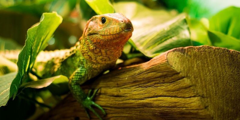 Reptile Studies with learndirect