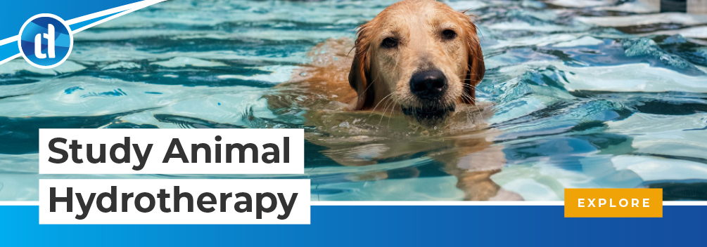 learndirect - study animal hydrotherapy online