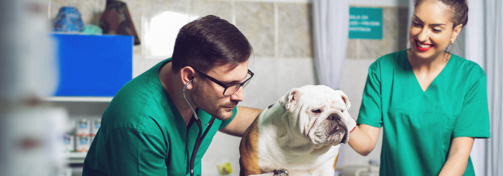 How do I become a Veterinary Support Assistant?