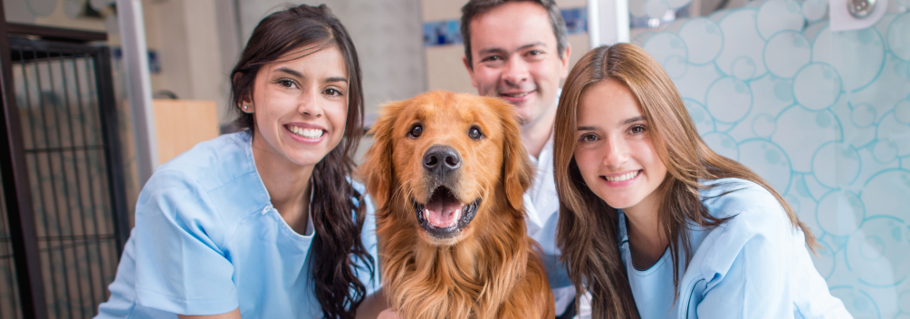 learndirect - What advice would you give to an aspiring Vet Tech?