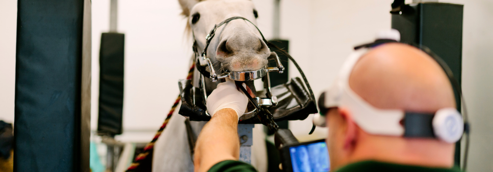 learndirect - Become a specialised Vet Nurse