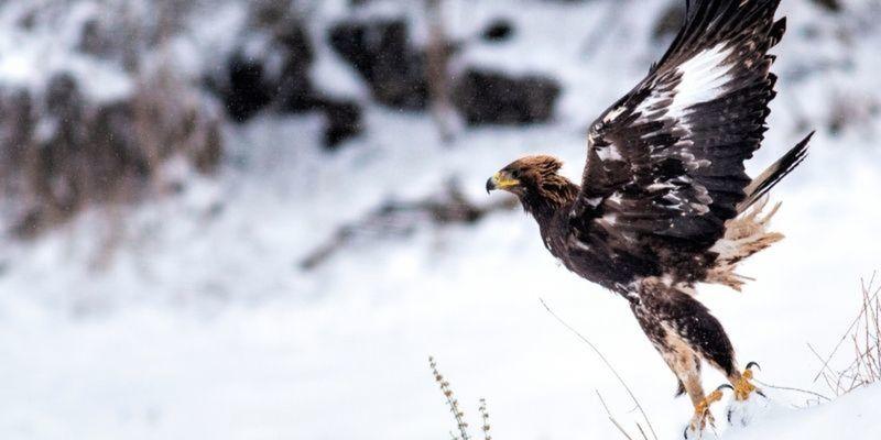 wildlife photography courses