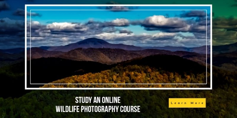 learndirect photography courses